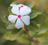 Cool Yard Wildflower