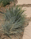 Grass #5xx (8095)