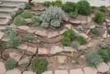 E Artemisia Garden [2009] (8812)