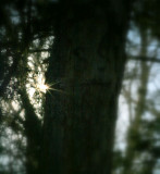 Face in the woods. The trees have eyes.