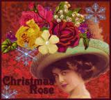 thechristmasrose.jpg