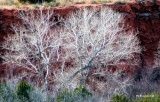 white lace cottonwoods.jpg