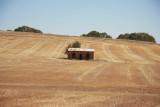 Shed in wheat field