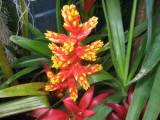 A bromeliad flower