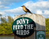 IF ONLY BIRDS COULD READ..........