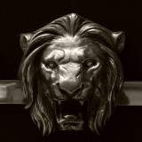 Magestic Lion