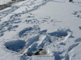 MOAC snow angel