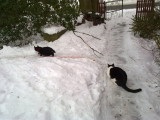 Frederik & Molly in the snow