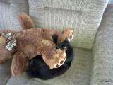 Molly and her teddy bear
