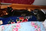Molly & Mulle Efter en lang  hård dag er det godt og komme i seng og sove