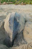 Leatherback Digging Hole