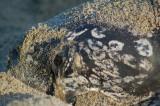 Leatherback - my LeatherHomie