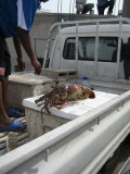Spiny Lobster - we ate him