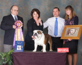 Bulldog Club of America National Show  Week 2009, Kansas City MO
