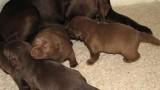 Puppies @ 3 Weeks