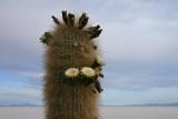 Bolivia - Isla Incahuasi, Salar de Uyuni 9