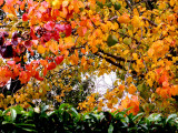 12-14-09 Rainbow Colors of Fall 1.jpg