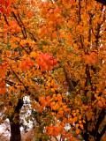 12-14-09 Rainbow Colors of Fall 2.jpg