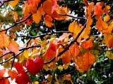 12-14-09 Rainbow Colors of Fall 3.jpg