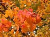 12-14-09 Rainbow Colors of Fall 4.jpg