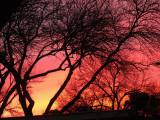 1-16-2010 Sunrise 1.jpg