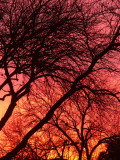 1-16-2010 Sunrise 2.jpg
