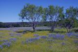 4-26-2010 Willow City Loop 72.jpg
