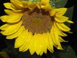 5-10-2010 Morning Dew 10.jpg