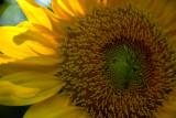 5-27-2010 Sun-kissed 4.jpg
