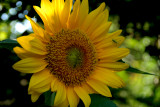 5-27-2010 Sun-kissed 6.jpg