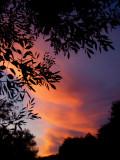 11-27-07 Cirrus Clouds Sunset 5.jpg