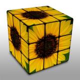 rubik sunflower.jpg