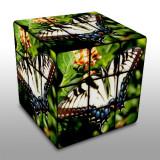 rubik swallowtail.jpg