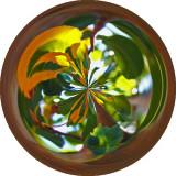 pear tree leaves circles.jpg