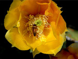 Cactus 3.jpg