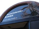 Invertebrate Exhibit