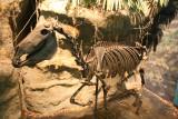 Horse Skeleten