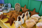 Sea Life at the Straw Market