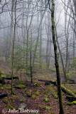 Fog in the Smoky's