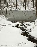 TN Snow Storm 1-28-2010