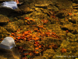 Rock, Leaves and Stream