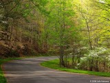 Spring Road