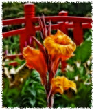 Flowers 2008