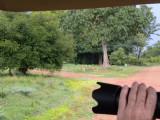 impala_and_puku