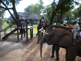 The loading platform and the smaller elephants.jpg