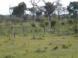 The landscape around Linvingstone.jpg