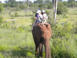 The smallest ridable elephant and two kids from Australia.jpg