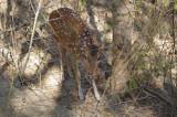 Deer at Meghla Safari (2).jpg