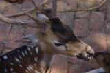 Deer at Meghla Safari (3).jpg