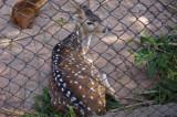 Deer at Meghla Safari (4).jpg